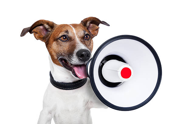Hund Megafon – Foto