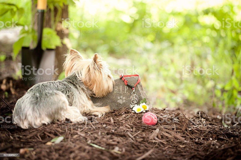 Dog Memorial stock photo