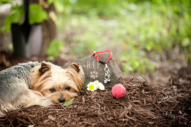 620 Pet Memorial Stock Photos, Pictures & Royalty-Free Images - iStock