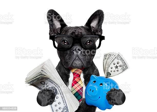 Dog money and piggy bank picture id585054838?b=1&k=6&m=585054838&s=612x612&h=ymlcji8m2rlcd5tn9agxqblg6m7sfaeugcwl t3o0du=