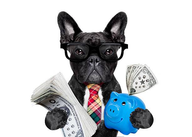 dog money and piggy bank - кредит и кредитные карты стоковые фото и изображения