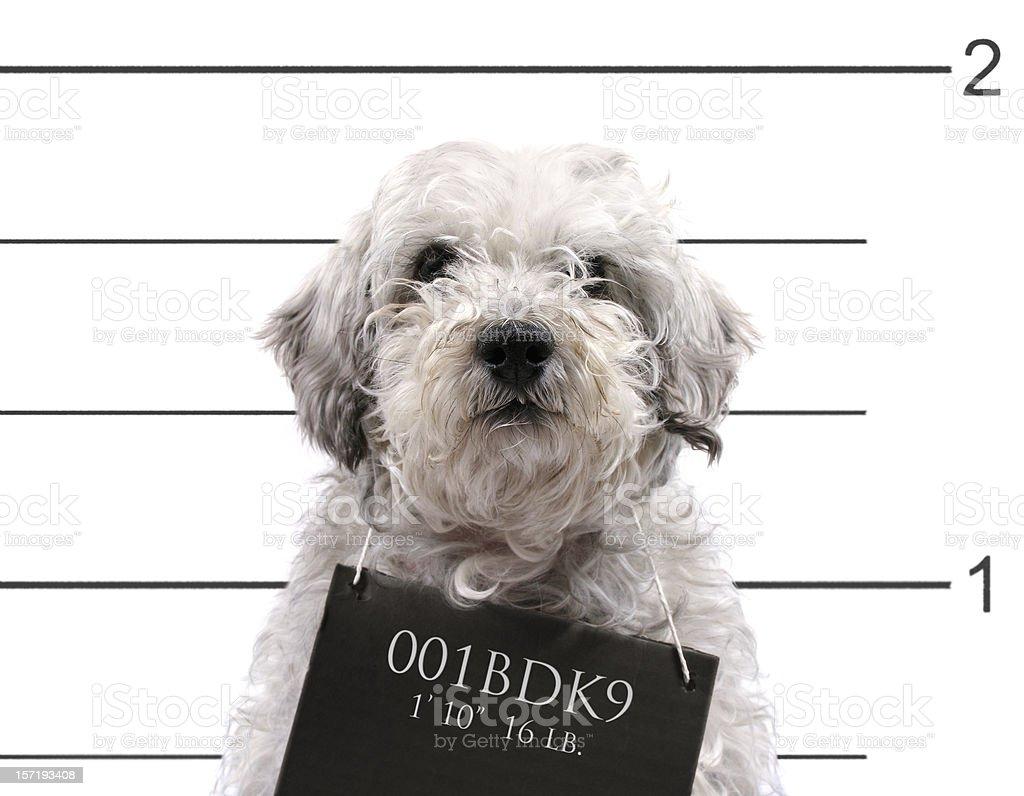 Dog Mug Shot royalty-free stock photo