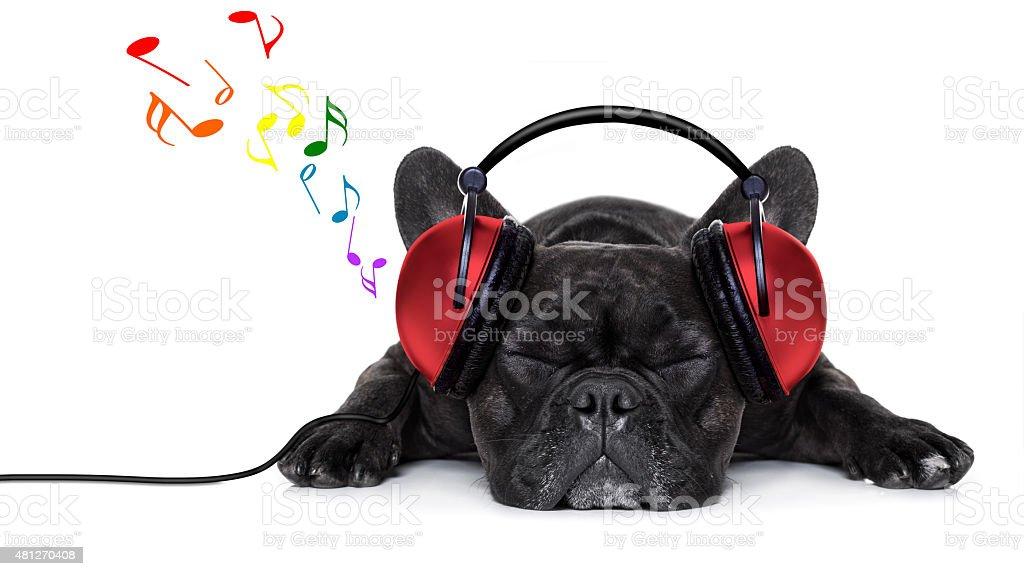 dog music stock photo