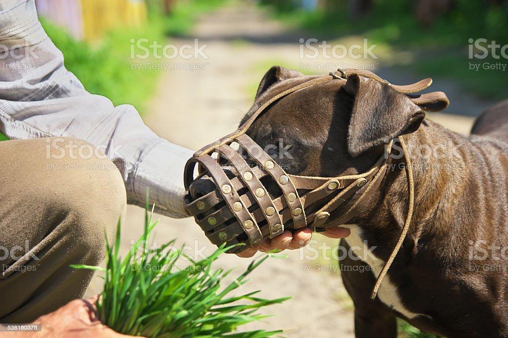 dog muzzled stock photo