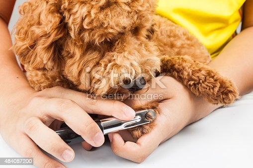 istock Dog nails being cut and trimmed during grooming 484087200