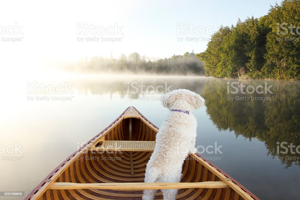 Dog Navigating From the Bow of a Canoe stock photo