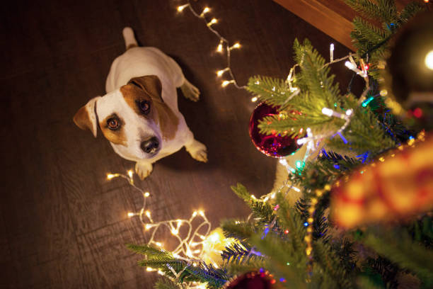Hund in der Nähe von Weihnachtsbaum – Foto