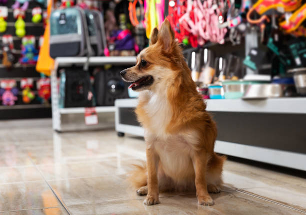 dog near different variation of goods for animals stock photo