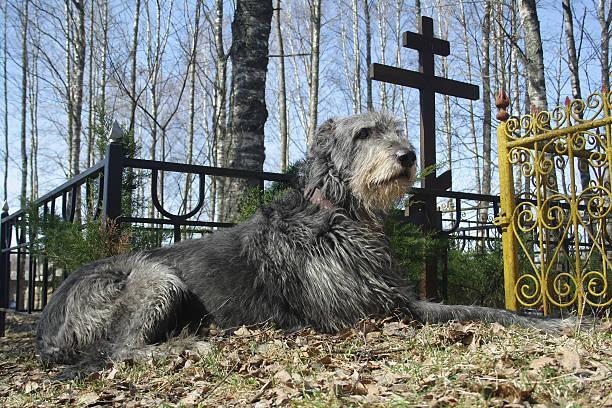 Dog Headstone, Pet Gravestone