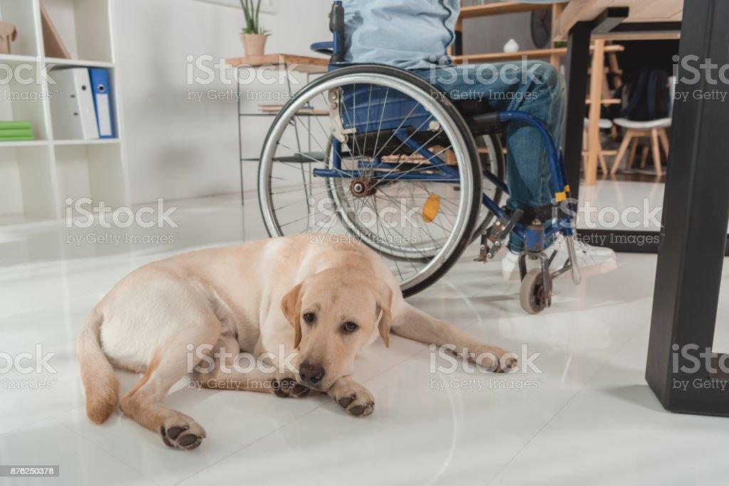 dog near man in wheelchair stock photo