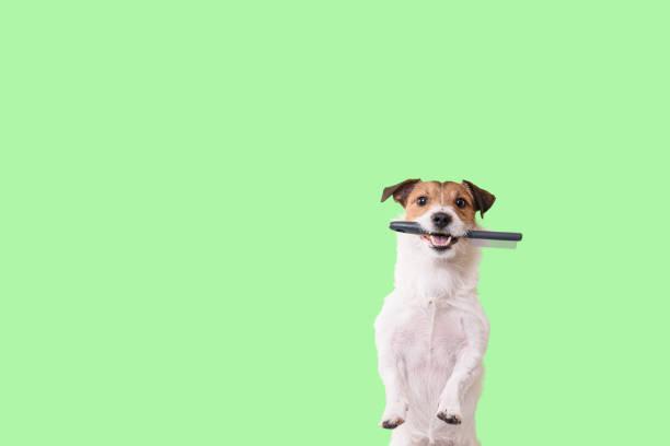 De hond vergt het verzorgen concept met grappige shaggy hond die het verzorgen borstel in mond houdt foto