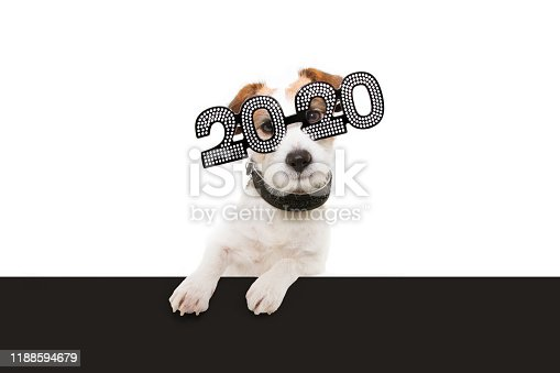 istock dog new year with paws over black edge. wearing  glasses with the inscription 2020 on a white background 1188594679
