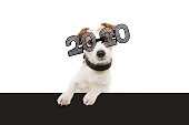 dog new year with paws over black edge. wearing  glasses with the inscription \
