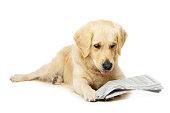 Dog News