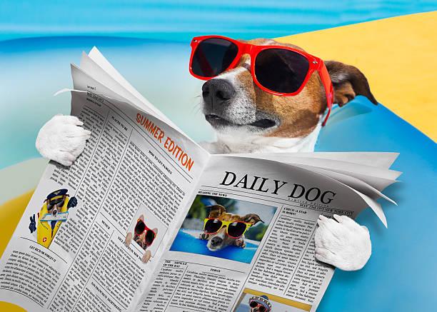 dog newspaper reading - newspaper beach stockfoto's en -beelden
