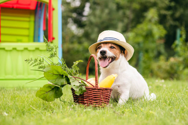 Hond naast mand vol natuurlijk vers voedsel uit eigen tuin foto