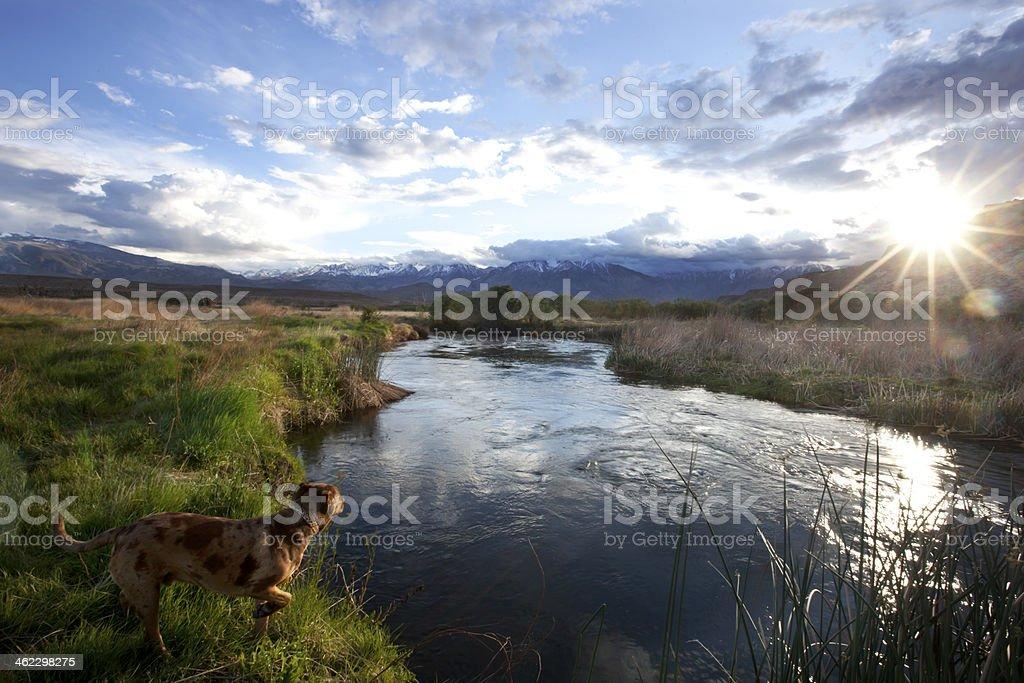 Dog next to river stock photo