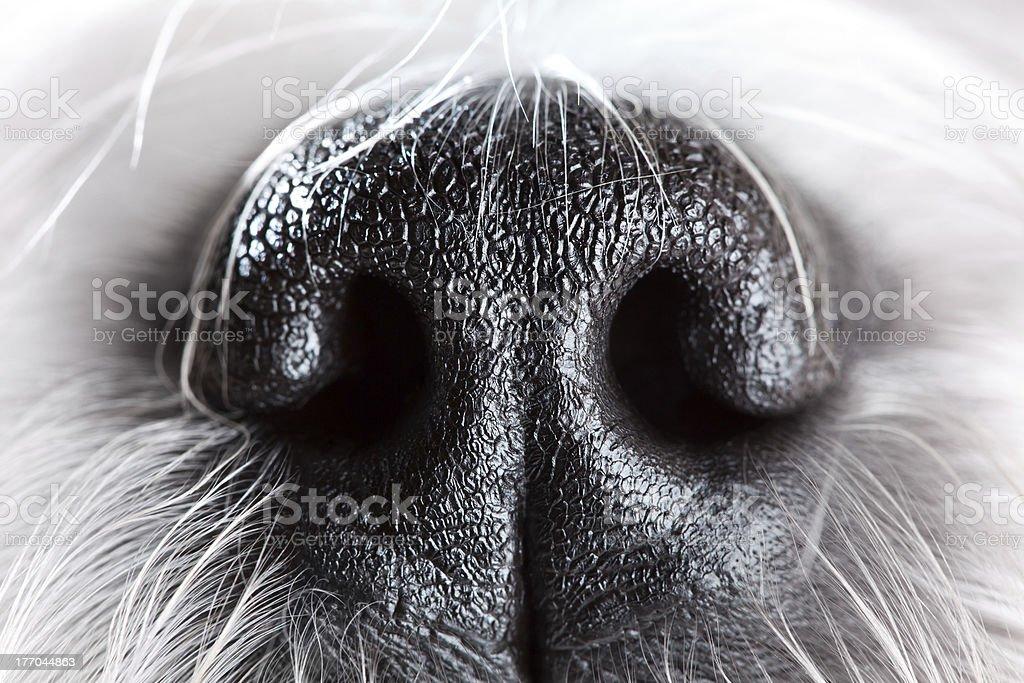 Dog nose close-up stock photo