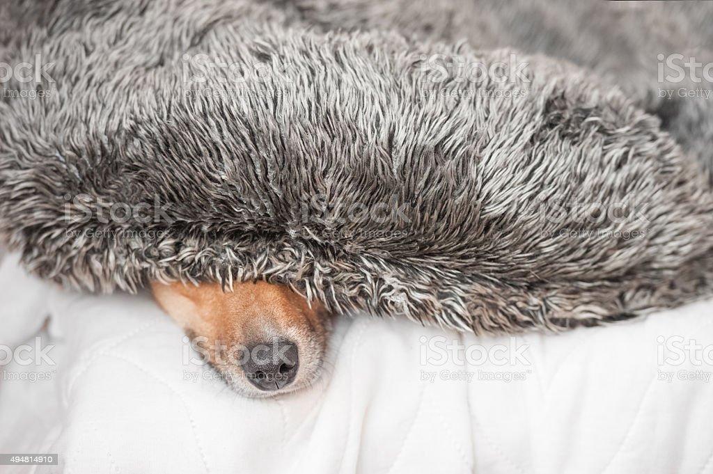 dog nose closeup stock photo