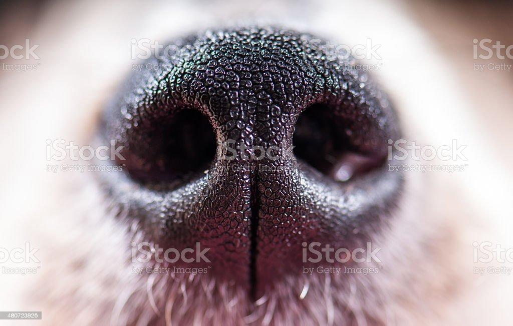 Dog nose stock photo