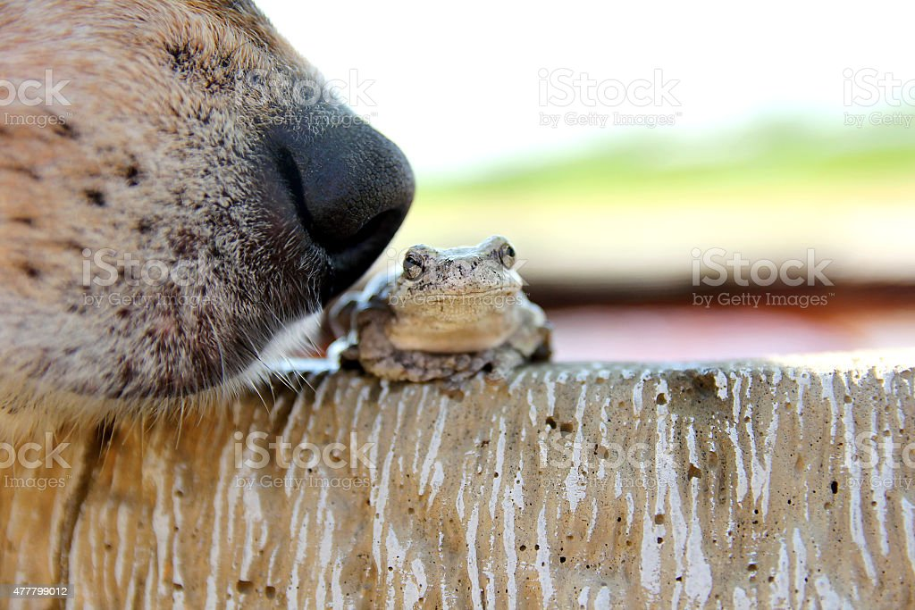 Dog Nose Sniffing Tree Frog Outside stock photo