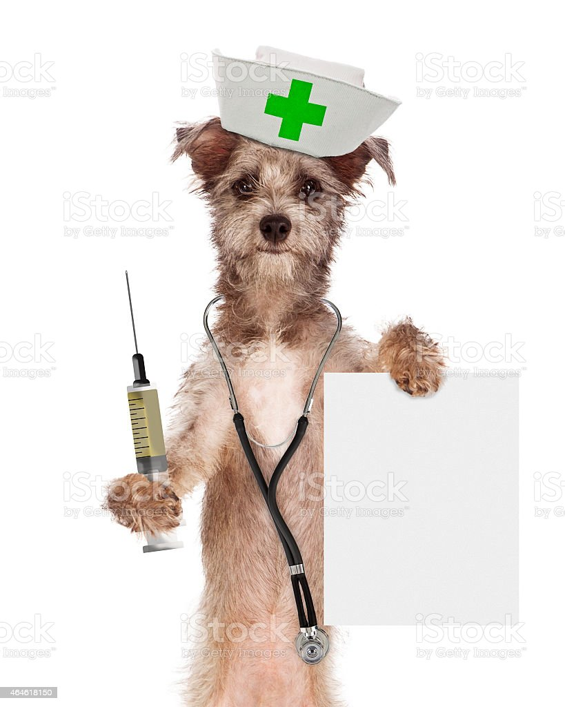 Dog Nurse With Shot and Sign stock photo