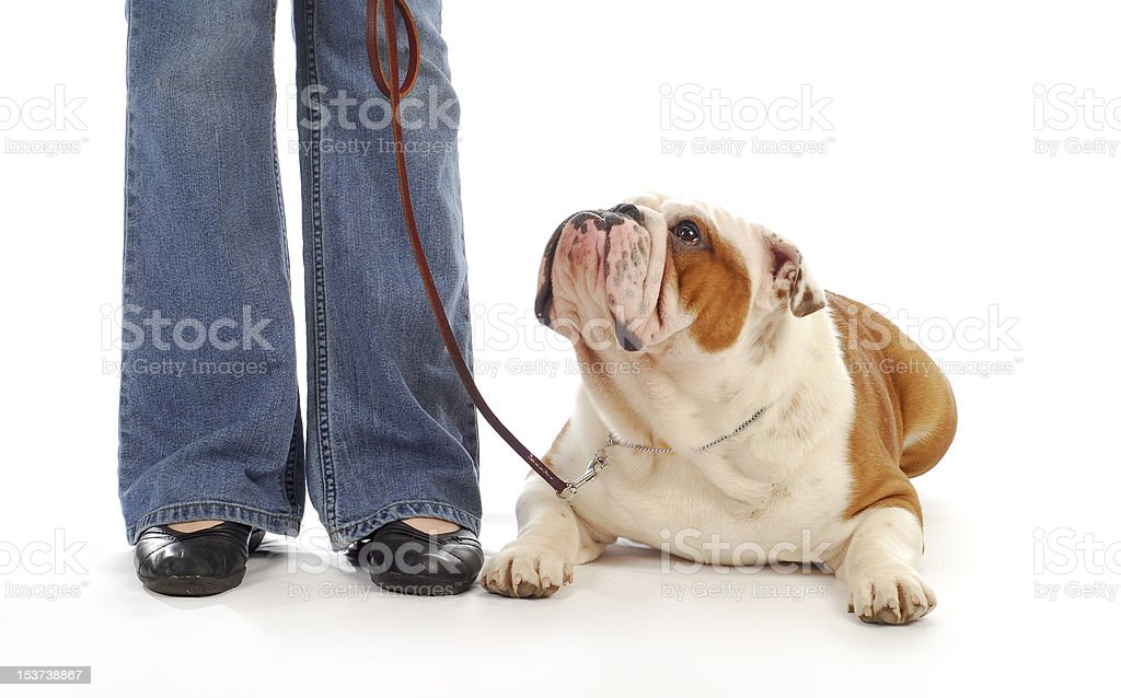 dog obedience royalty-free stock photo