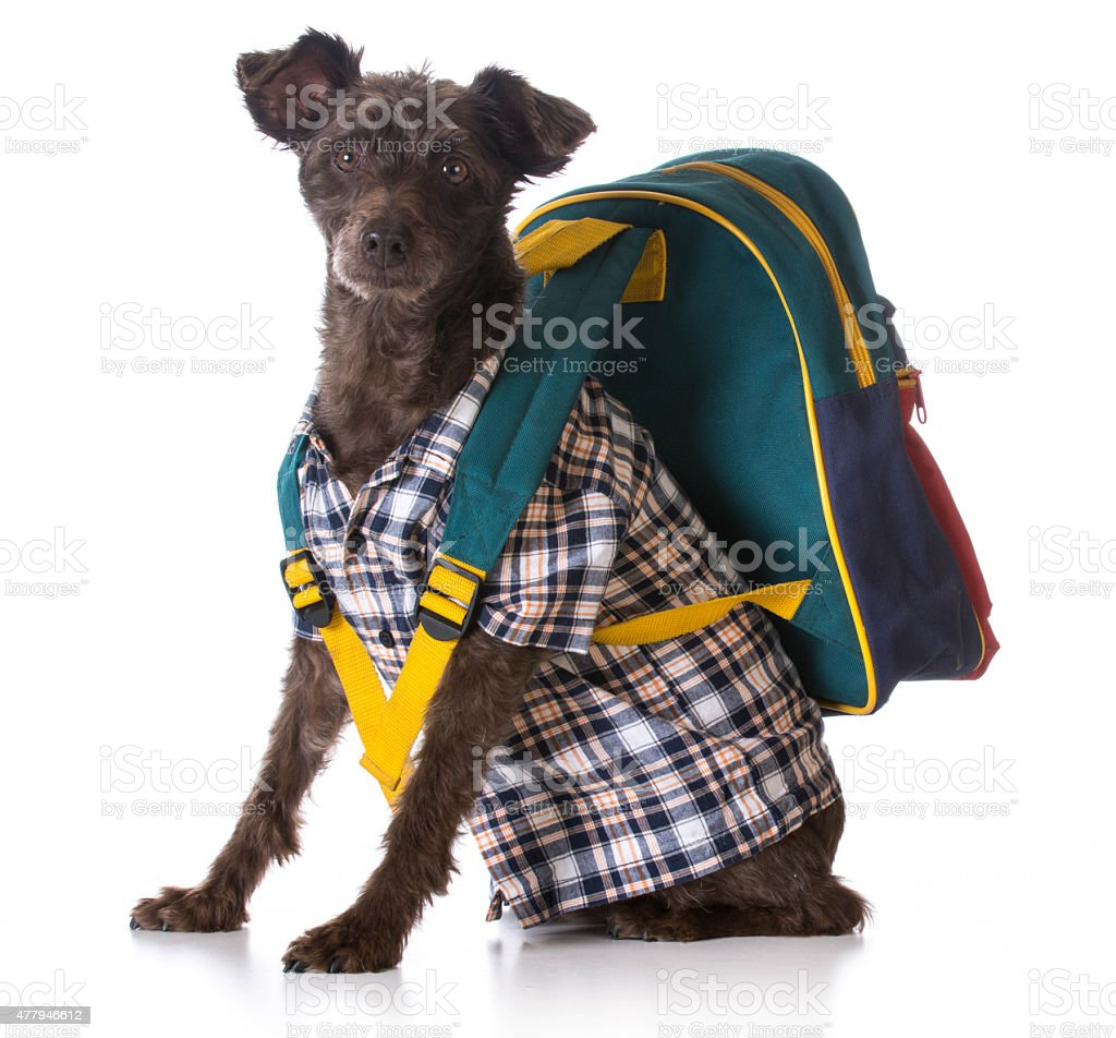 dog obedience stock photo