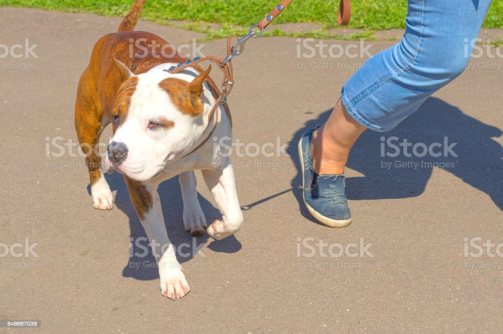 dog of terrier Close-up stock photo