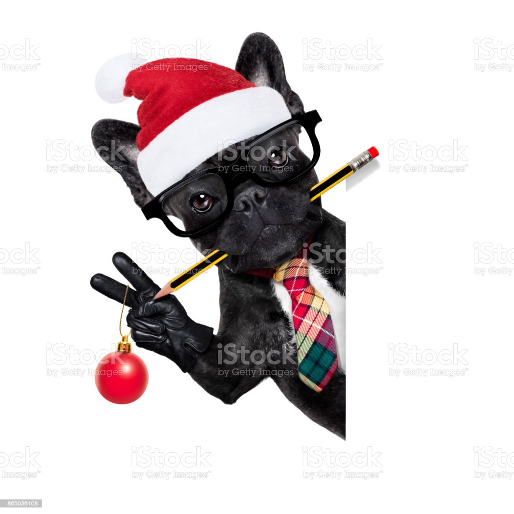 dog office worker on christmas holidays stock photo