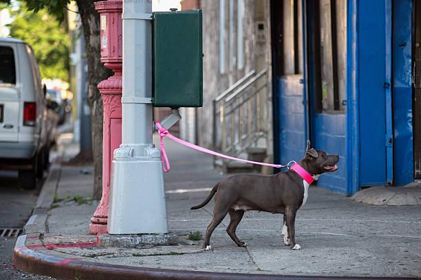 cão na coleira vinculadas a uma lâmpada de rua. - amarrado - fotografias e filmes do acervo