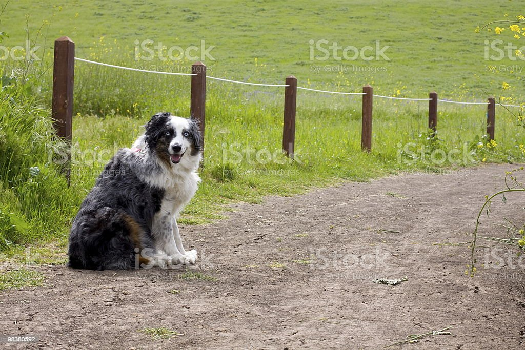 Dog on a Path royalty-free stock photo