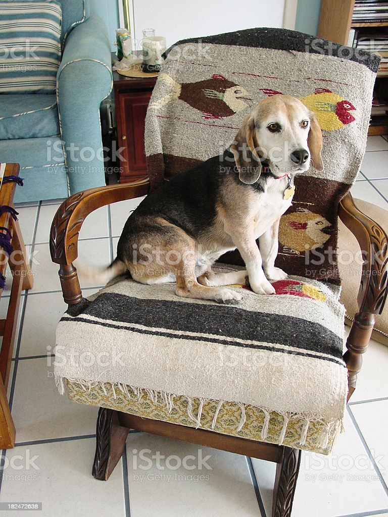 Astounding Dog On A Rocking Chair Stock Photo Download Image Now Istock Squirreltailoven Fun Painted Chair Ideas Images Squirreltailovenorg