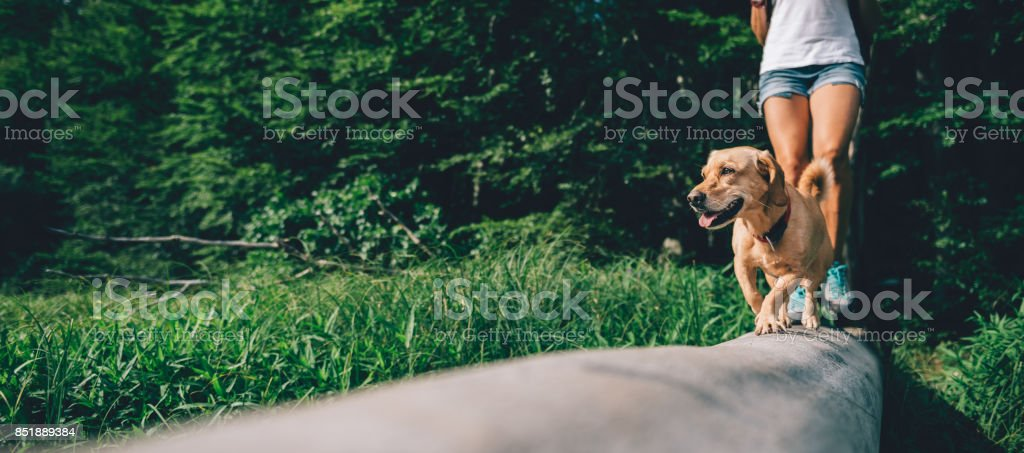 Dog on a tree log with hiker stock photo