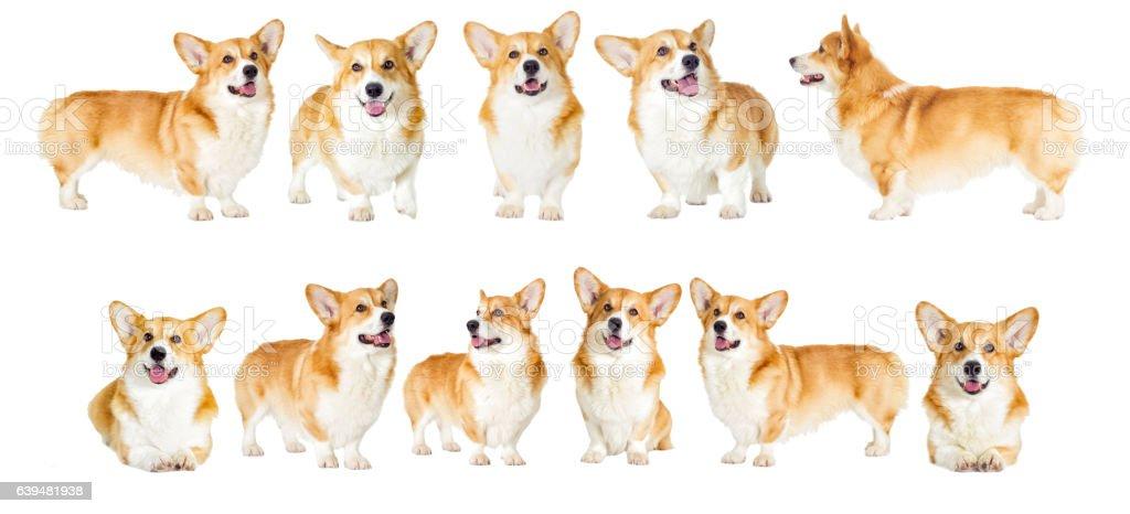 dog on a white background stock photo
