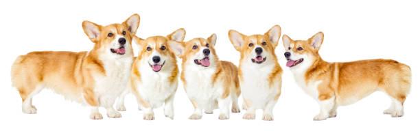 Dog on a white background picture id639486026?b=1&k=6&m=639486026&s=612x612&w=0&h=9xh4d4oiuni2mfrhftuhd3sbc5n3fgz323k rlhcj5o=