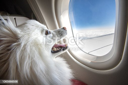 A smiling puppy looking out of an airplane window while in flight.