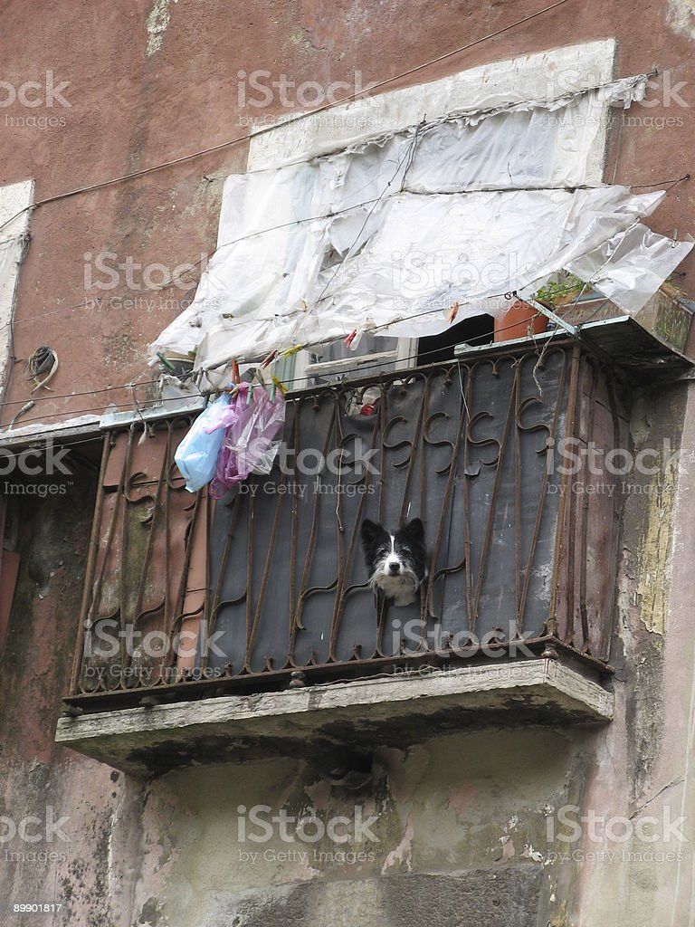 Dog on balcony royalty-free stock photo
