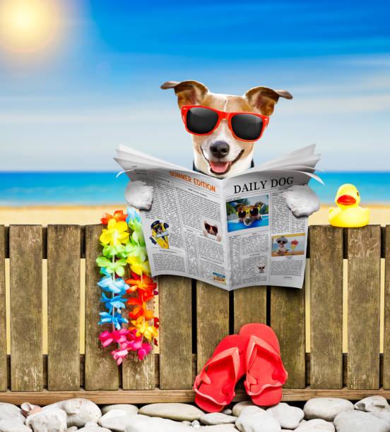 hond op strand op zomervakantie vakantie - newspaper beach stockfoto's en -beelden