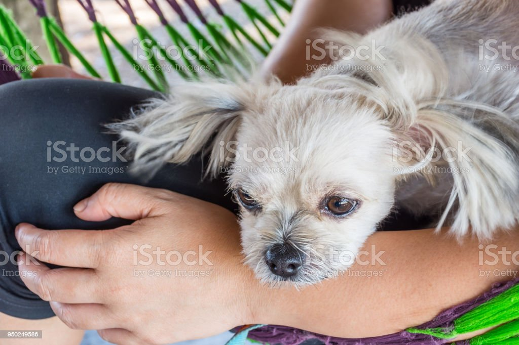 Dog on bed and looking at something when travel stock photo