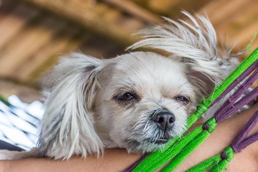 Perro En La Cama Y Mirando Algo Cuando Viaje Foto de stock y más banco de imágenes de Aire libre