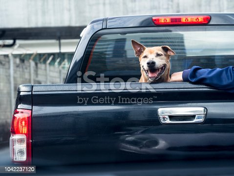istock Dog on black pick up truck back view 1042237120