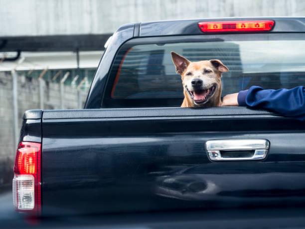 siyah kamyon arkadan görünüm aç köpek - pikap stok fotoğraflar ve resimler