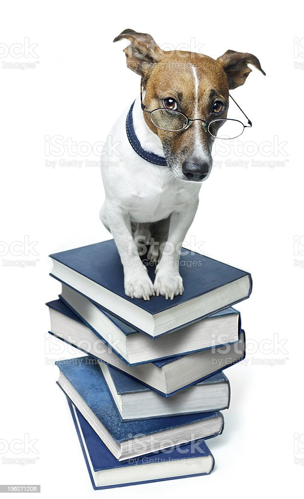 dog on book stack royalty-free stock photo