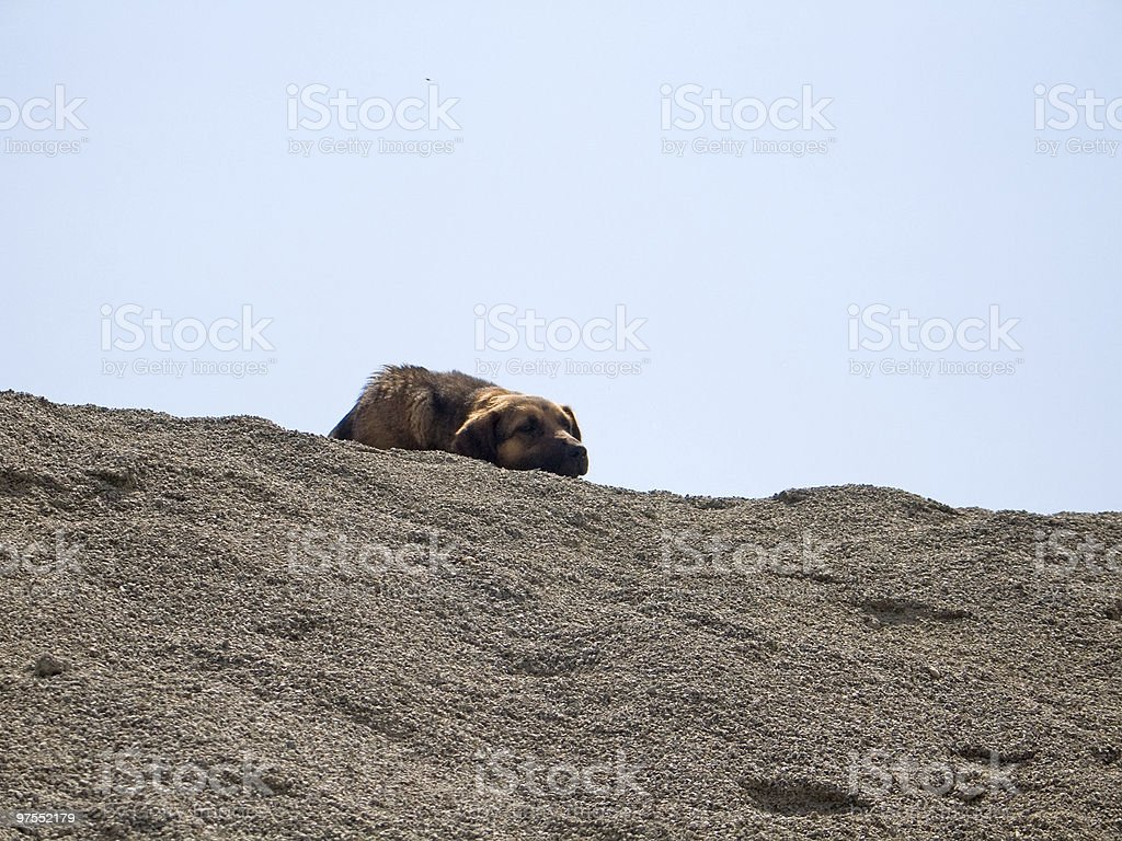 Dog on gravel pile royalty-free stock photo