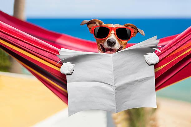 dog on hammock - newspaper beach stockfoto's en -beelden