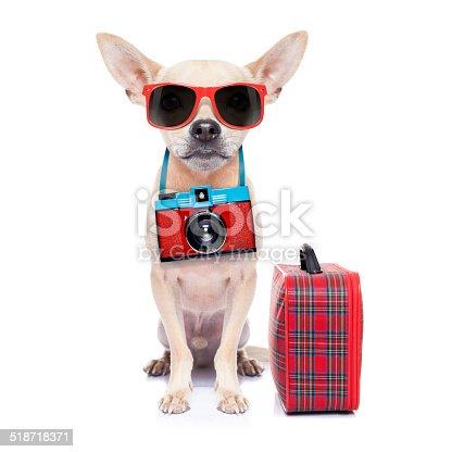 istock dog on holidays 518718371