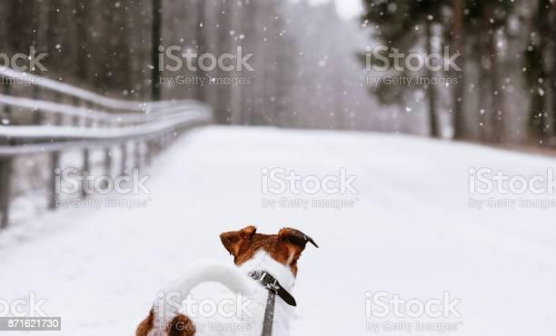 Dog on leash looking on open road at winter snowy day picture id871621730?b=1&k=6&m=871621730&s=612x612&h=lg9xxorisevximynxtsuy3svyqjrc7tkpsempmioa m=