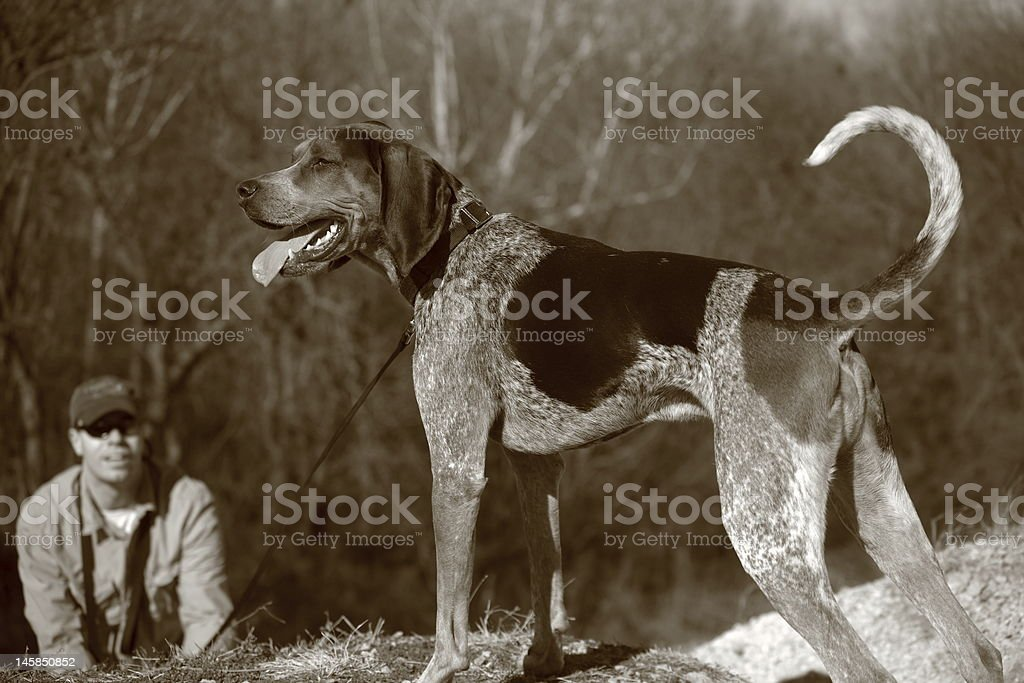Dog on leash stock photo