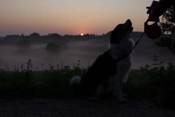 Dog on misty heath sunrise picture id1170111332?b=1&k=6&m=1170111332&s=612x612&w=0&h=yw7 wrmkrlmkz4r8hh1j5hibop xrdjjeljzpqnqkdk=